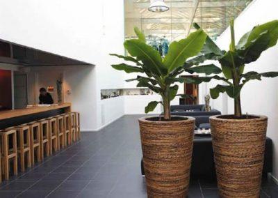 decoration-vegetale-commerces