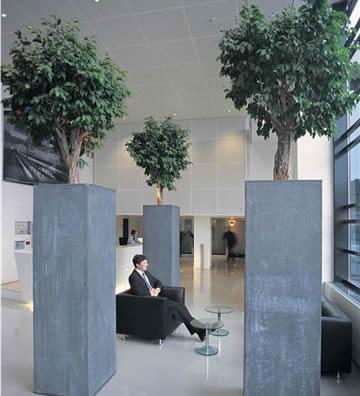 décoration végétale tertiaire hollandr