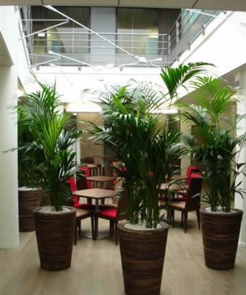 décoratoin végétale pour commerces, bureaux (Caen - Calvados -14 en Normandie)